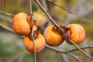 Las mejores frutas de verano