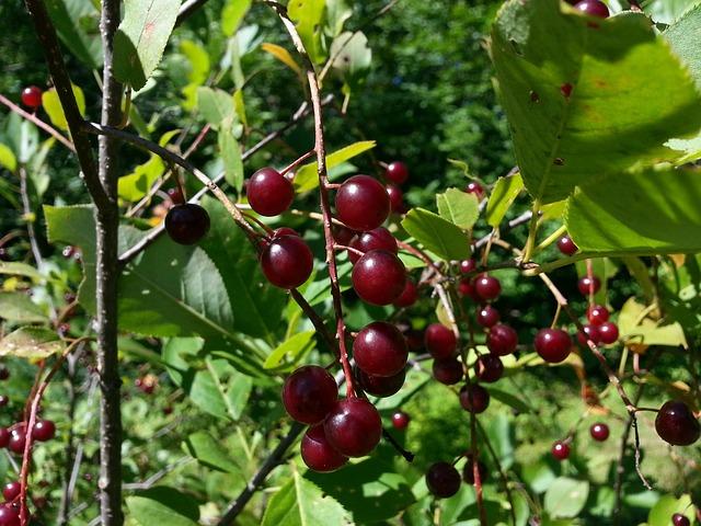 Las mejores frutas del verano