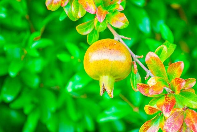 cuales-son-las-temporadas-de-cada-fruta